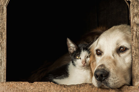Common Causes Of Weakness In Furry and Feline Buddies
