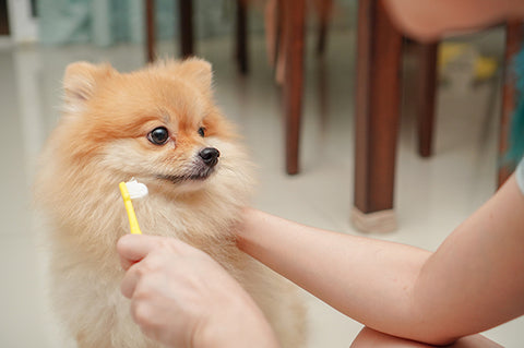 Pet toothpaste for prevention of gum disease: