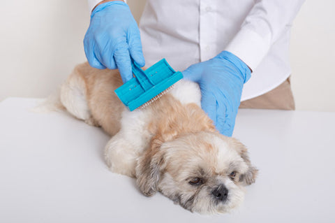 Grooming your paw pals: