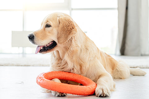 Pet toy to comfort your pup