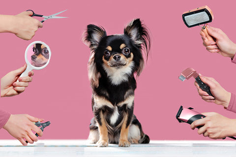 Is your fur pal's grooming kit ready?