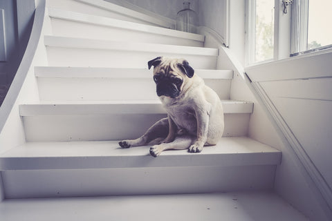 Is your pet stressed? Here are 5 signs to look out for