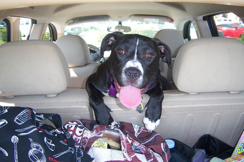 Travel tips for dogs: Your travel starts now