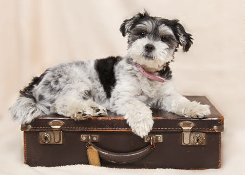 Your Dogs packing list: Travel tips for dogs