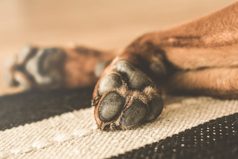 Feet and Paw Care