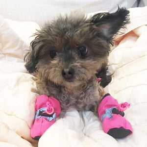 Adorable Dog Booties