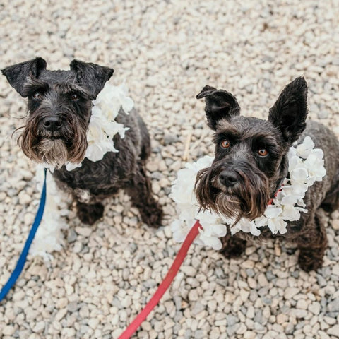 two dogs at wedding
