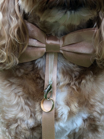Ring bearer bow tie in champagne
