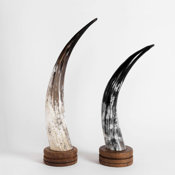Ankole Horn Decorative Object