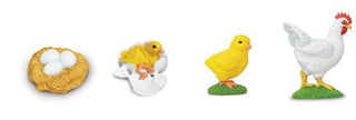 Lifecycle Replicas: Chicken Stages (C)