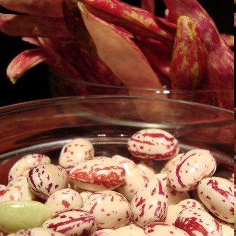 Shelled borlotti beans ready for cooking