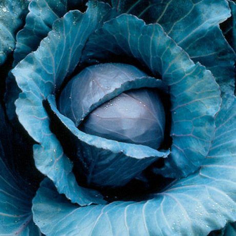 Best Brassica Combo Mix Red cabbage