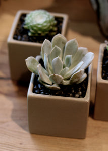 "ceramic 3.5"" square planter in 3 colors"