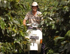 on scooter through coffee plants