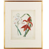 Scarlet Beauty Floral Framed Art Number Three