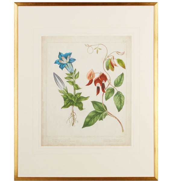 Scarlet Beauty Floral Framed Art Number Two