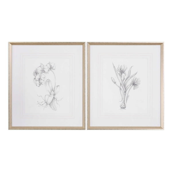 Botanical Sketches Framed Prints