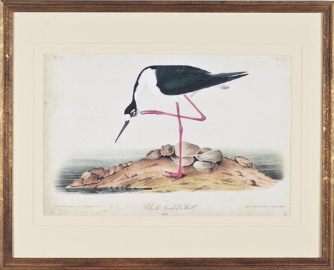 Black Necked Stilt Bird Framed