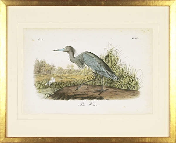Blue Heron Bird Framed