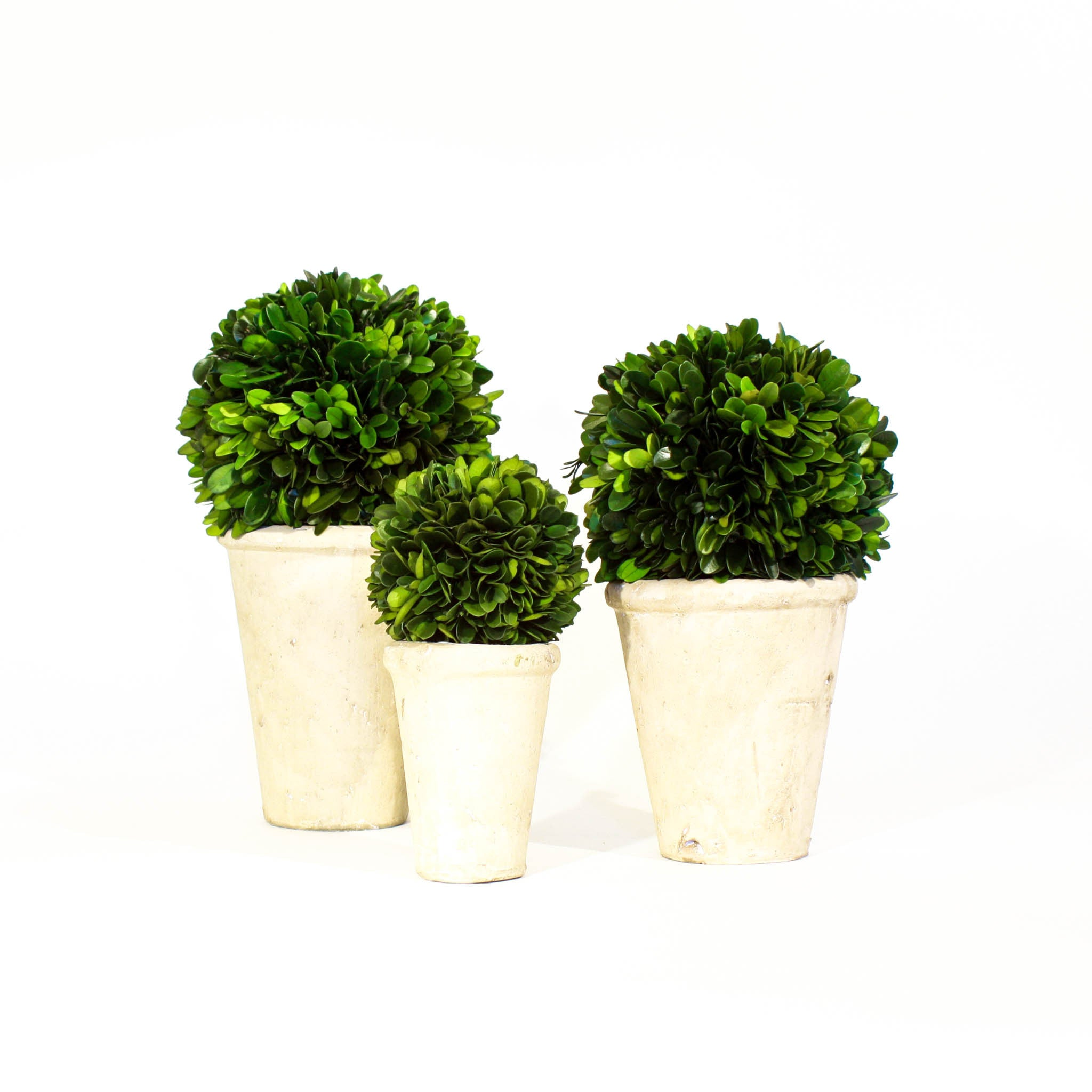 Boxwood Topiary (3 sizes) (Small)