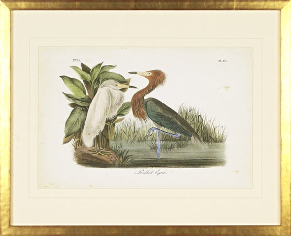 Reddish Egret Bird Framed