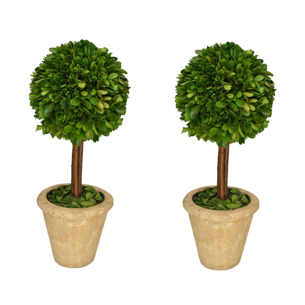 Preserved Boxwood Topiary Single Ball Set of Two