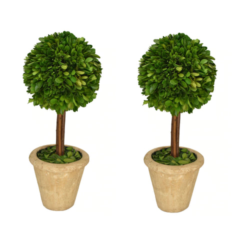 Preserved Boxwood Topiary Single Ball