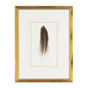 Feather Number One Framed Art
