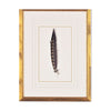 Feather Number Six Framed Art