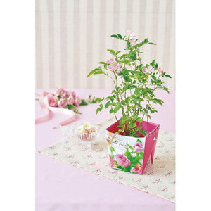 Mini Rose Floral Container | Seishin Tougei | Flower Growing Kit