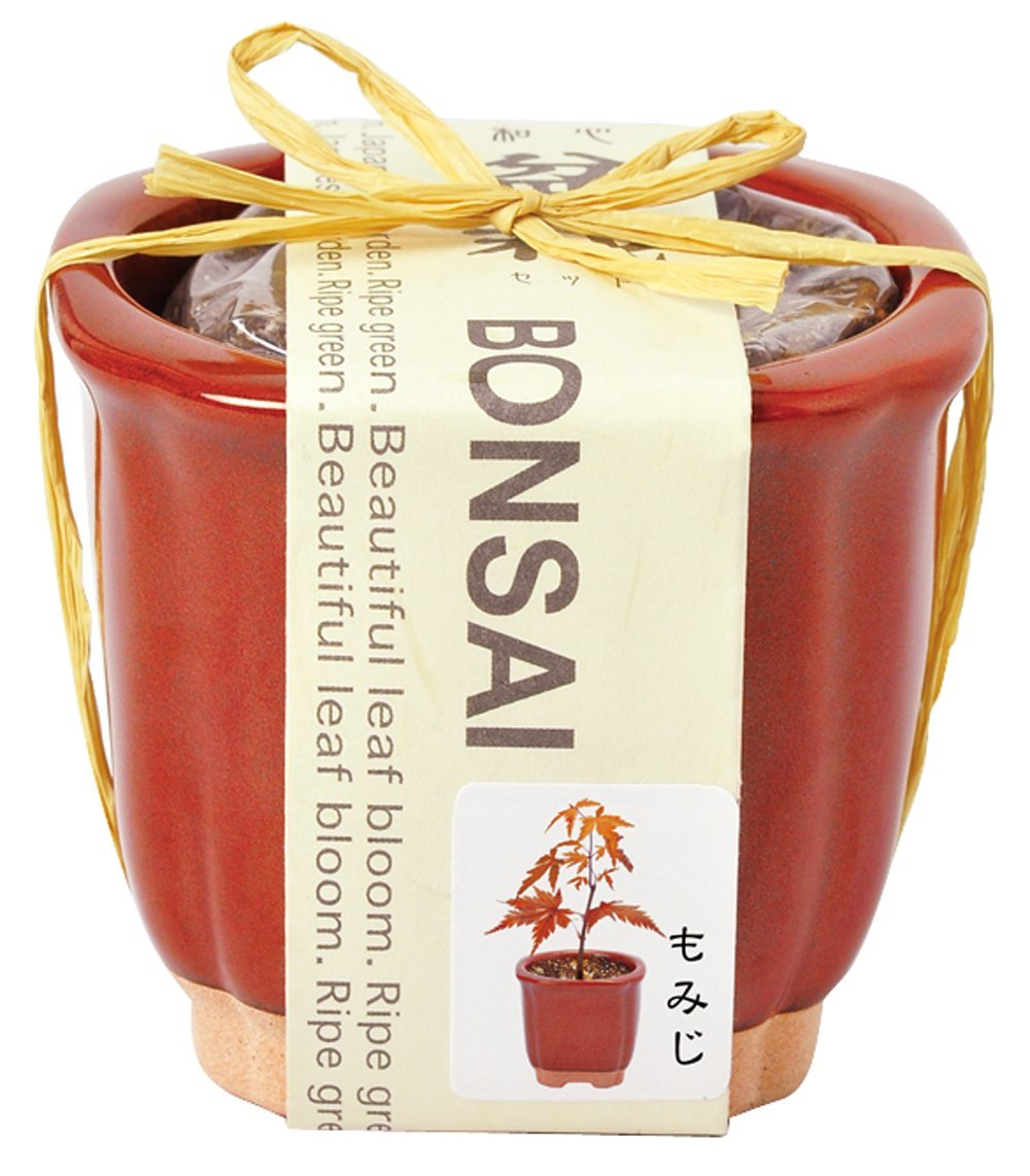 Wagokoro Bonsai saibai Growing kit | Seishin Tougei