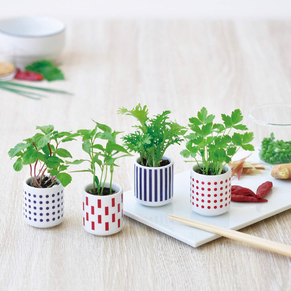 Mini Spice | Seishin Tougei | Herb cultivation set