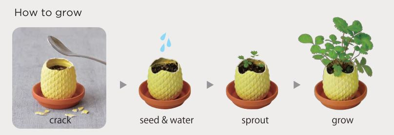 Pineappling | Seishin Tougei | Egg Growing Kit