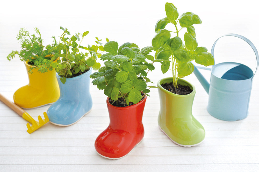 Baby Boots Cultivation Set | Seishin Tougei | Herb Growing Kit