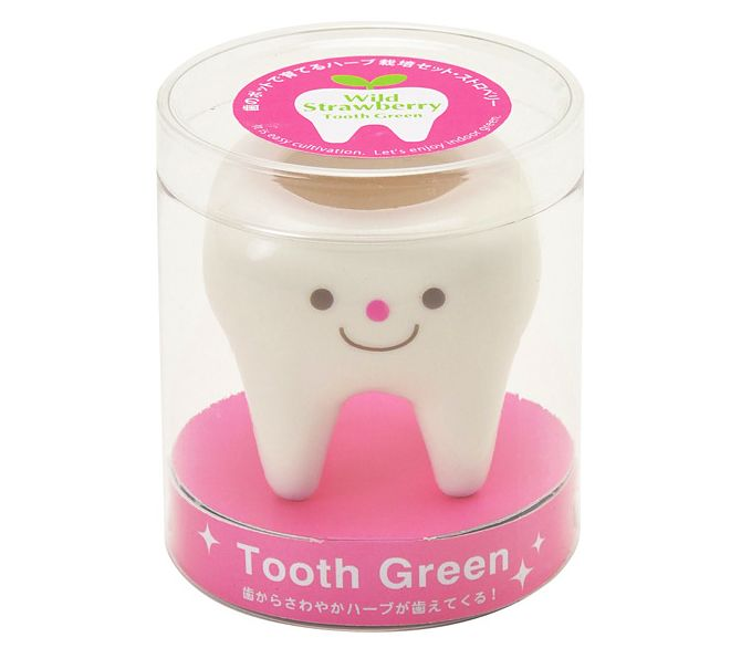 Tooth Green | Seishin Tougei | Mini Growing Kit