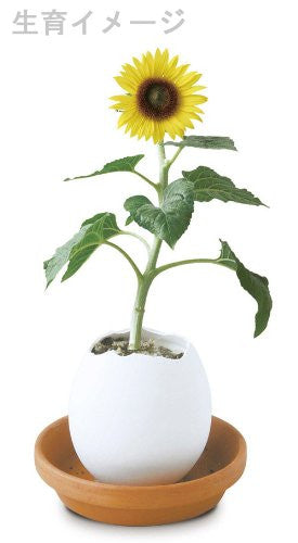 Egglings-Sun Flower | Seishin Tougei | Soil-based Growing Kit