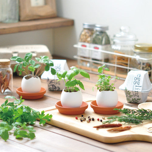 Egglings Cultivation Set | Seishin Tougei | Herb & Plant Growing Kit