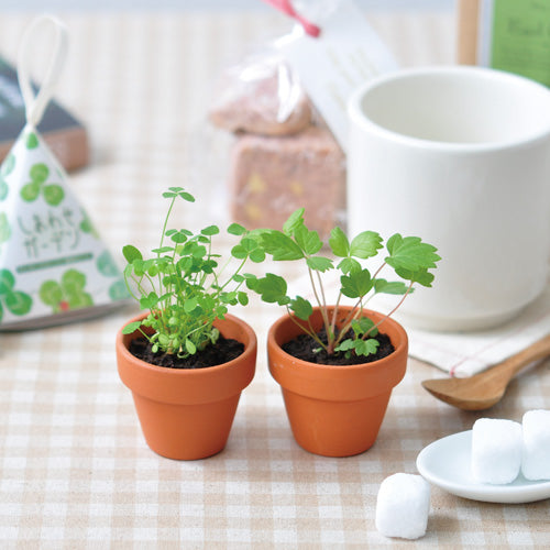 Shiawase Happy Garden | Seishin Tougei | Mini Growing Kit