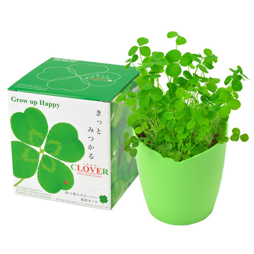 Four-leaf clover | Seishin Tougei | All-in-one Grow Kit