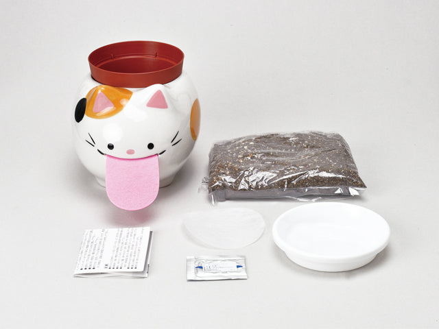 Peropon PAPA | Seishin Tougei | Herbs Growing Kit