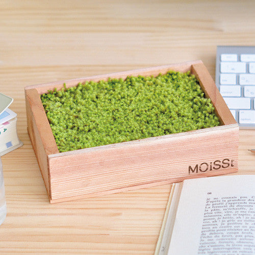 Moisst Moss | Seishin Tougei | Moss Growing kit