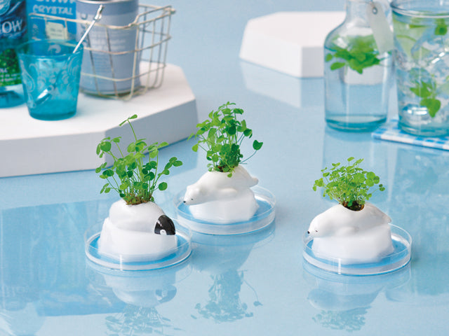 Frozoon | Seishin Tougei | Mini Plant Growing Kit