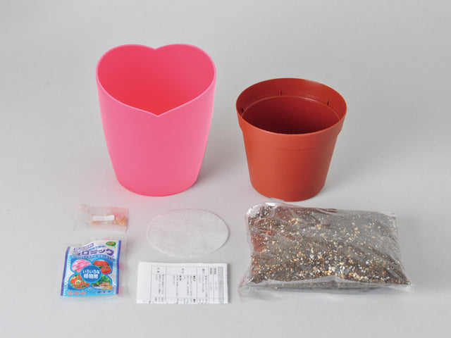 Pink flowered strawberry cultivation set | Seishin Tougei | Fruits Growing Kit