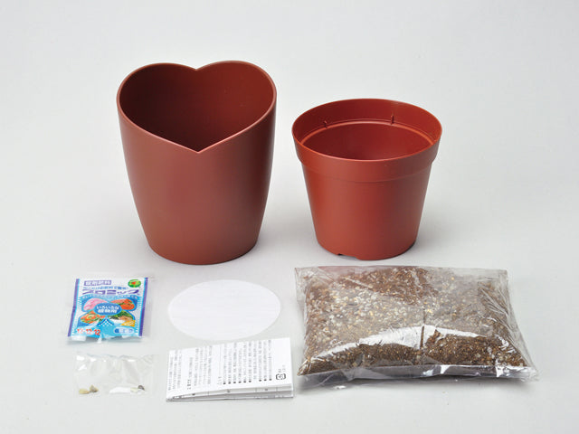 Chocolate Flower - Daisy | Seishin Tougei | Flower Growing Kit