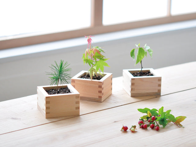 Sodatemas Bonsai Cultivation Set | Seishin Tougei | Japanese Cypress container kit