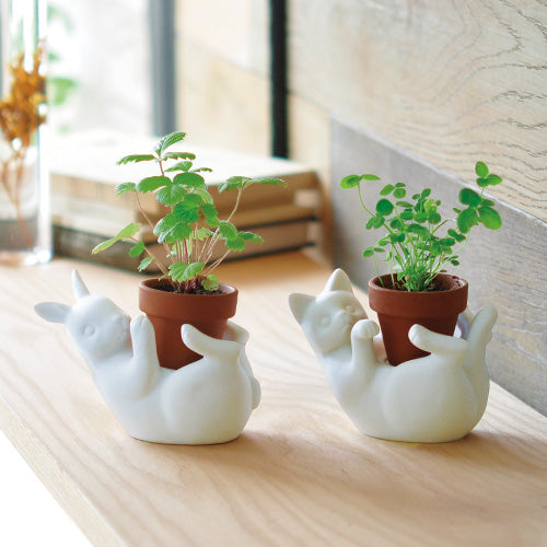 Pot Friends | Seishin Tougei | Ceramic Grow Kit