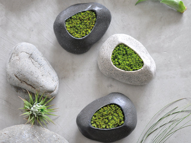Preserved Moss Stone | Seishin Tougei | Cultivation Kit