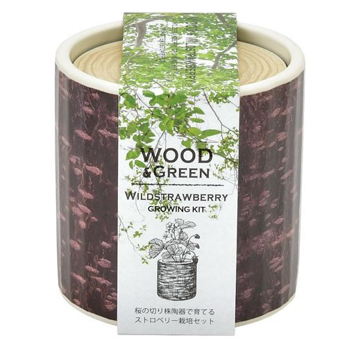 Wood & Green | Seishin Tougei | Plants Growing Kit