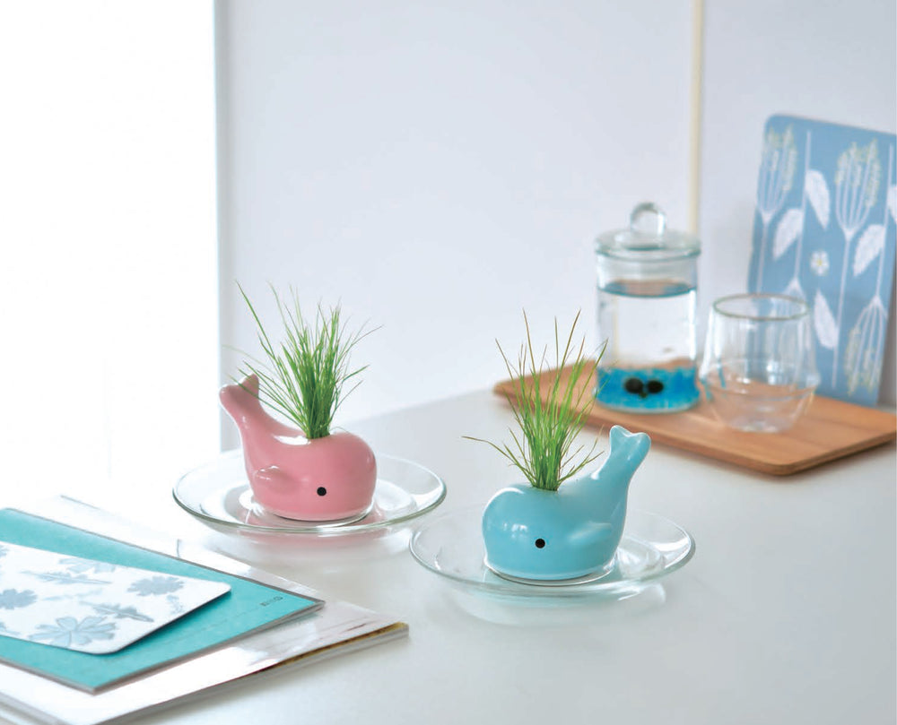 Happy Whale Growing Kit | Seishin Tougei | Self-watering Kit