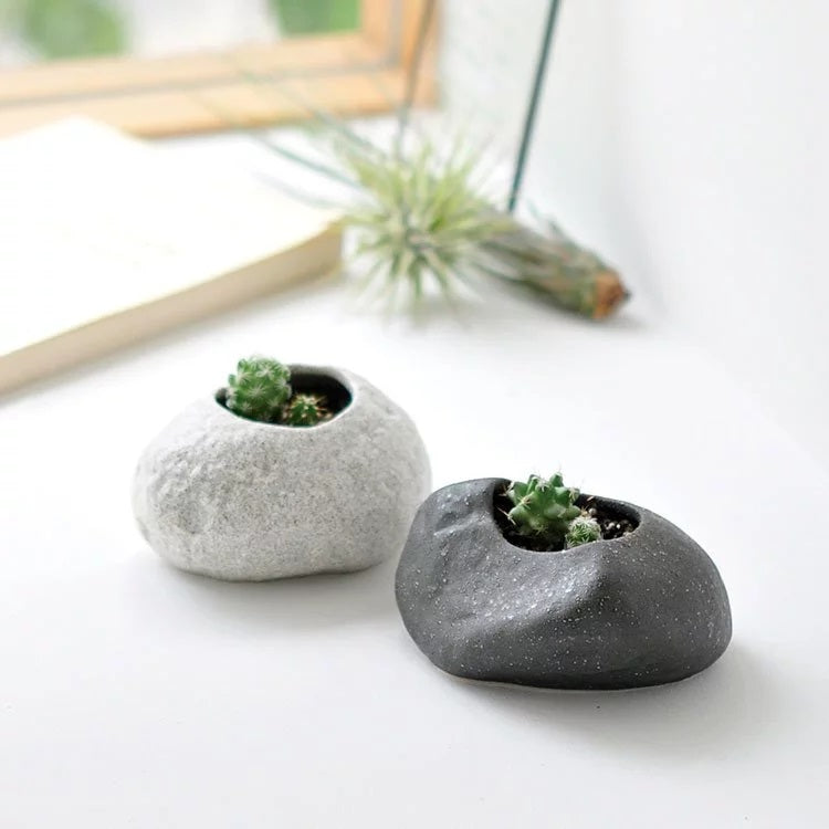 Plant Rock | Seishin Tougei | Plants Growing Kit